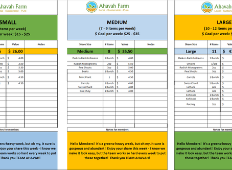 Week 4 Bag Packing List and Extras