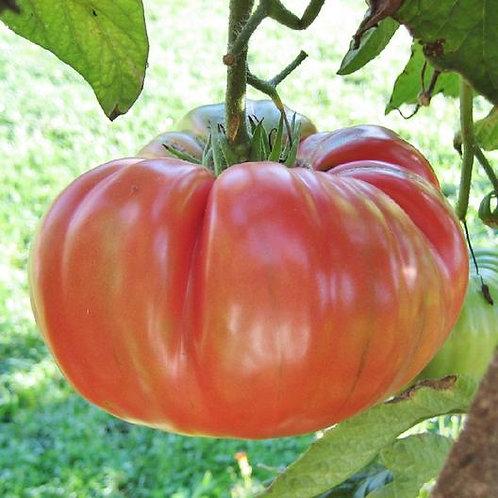 Tomatoes - Pink Brandywine Tomato Seedling