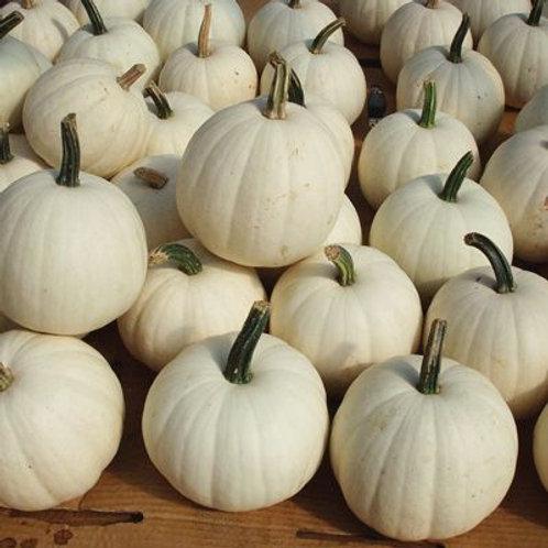 Pumpkin -Snowball White Pie