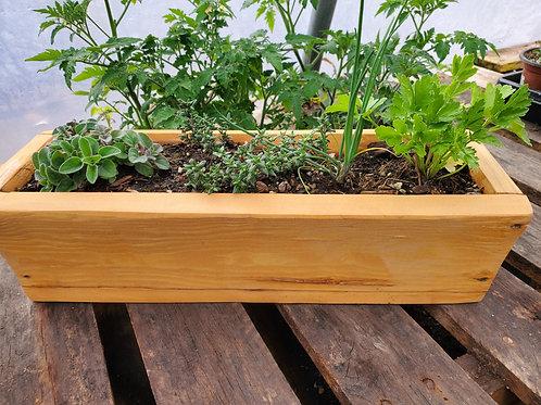 Herb Garden - By Asher