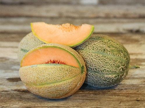 Melons - Hales Best Melon Seedling