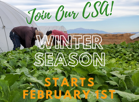 Fresh Vegetables Grown and Harvested for YOU, from your local farm, in the Middle of Winter!?