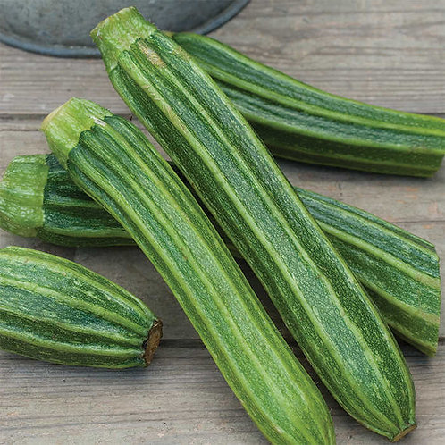 Summer Squash - Romanesco Italian Zucchini