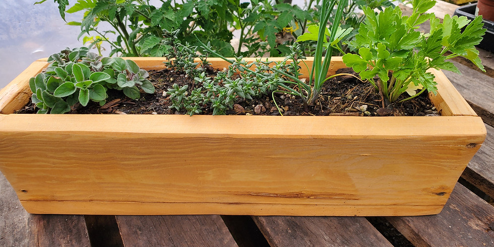 KIDS CLASS!!  Natural and Organic Mother's Day Windowsill Herb Garden. 2 Weeks. – By Asher Camire