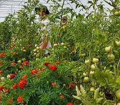 tess and shane in tomatoes.jpg