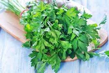 Herbs - Parsley (Italian Flat Leaf) Plant Seedling