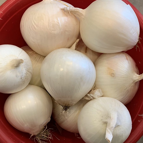 Onions - Sierra Blanca (White) Onion Seedlings (10-13 per order)
