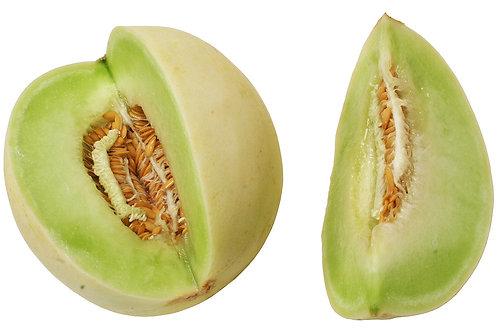 Melons - Honeydew Melon Seedling