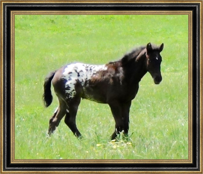Honey Bear in paddock 2 mths.jpg