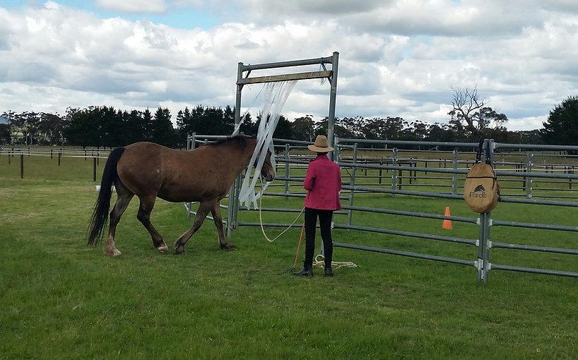 Kiana with horse in carwash small.jpg