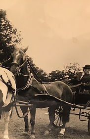 John Seear carriage driving tandem with Collar Harness