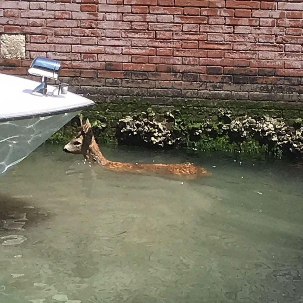 corzo Venezia