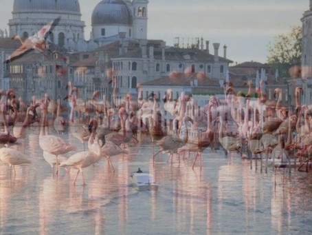 CORONAVIRUS AND PINK SWANS IN VENICE