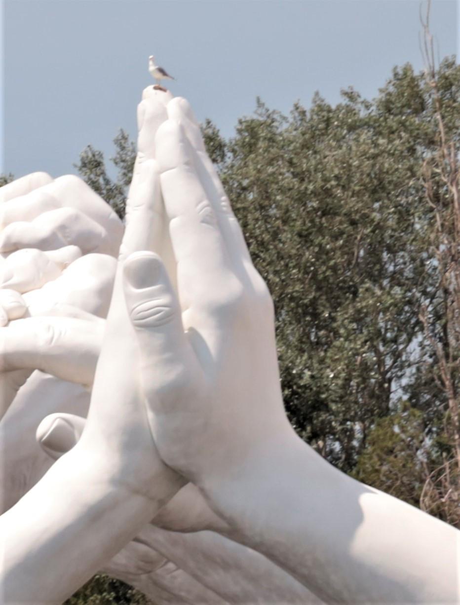 Pareja de manos NÚMERO 1. LA gaviota en la punta del dedo es una gaviota real!