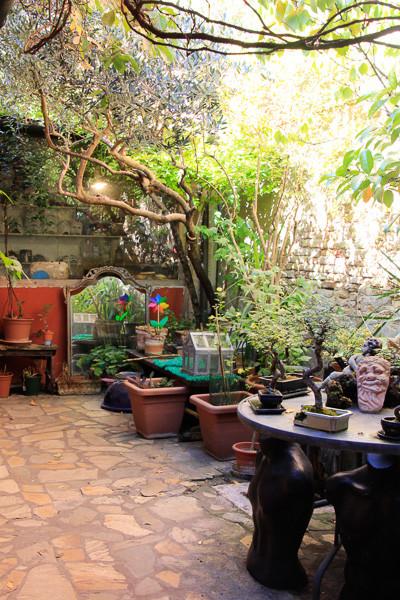 el jardín de bonsáis