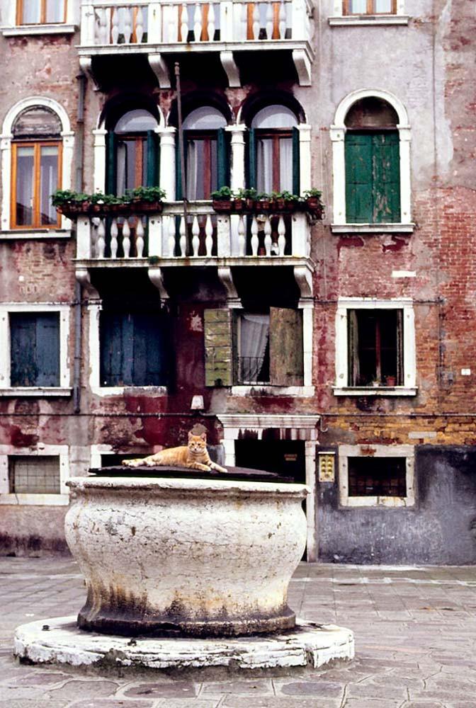Campo San Basegio con su típico pozo (y gato veneciano) con el Palacio Molín detrás