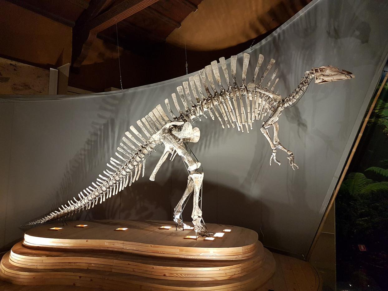 Ouranosaurus Nigerensis en el Museo de Historia Natural
