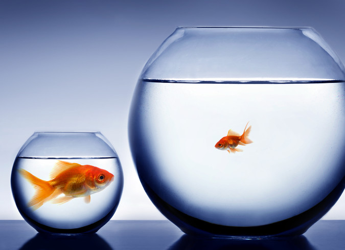 Be One with the 'Big Fish'