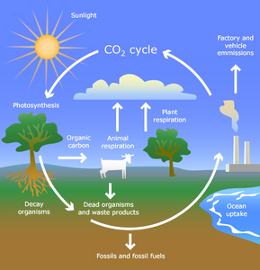 Cycling Matter and Energy Flow