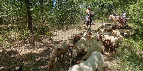 Pastoralisme en dordogne, éco- pâturage Dordogne, écopâturage 24