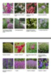 palette végétale paysagiste