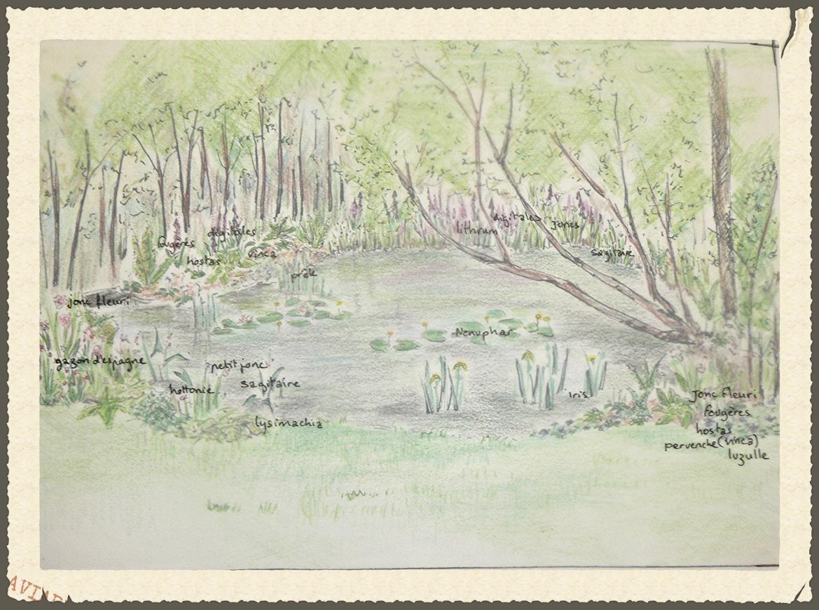 bassin avec plande plantation