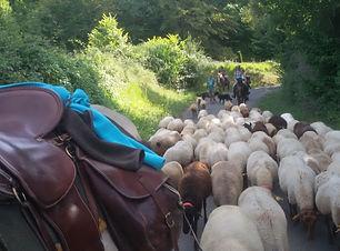 transhumance des brebis à cheval
