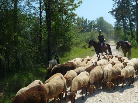 Journées pastorales programmées!