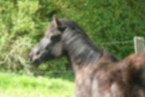 Promenade à poney pottock, balades à poney vézère montignac lascaux, découverte de la nature à poney, poney pour découvrir la dordogne, activités équestres pottock