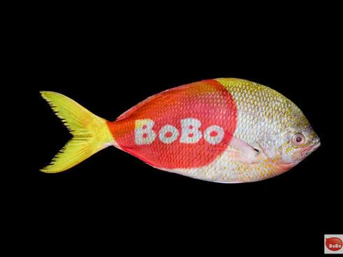 BoBo.jpg