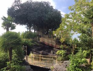 L'arbre des Robinson (DisneyLand)