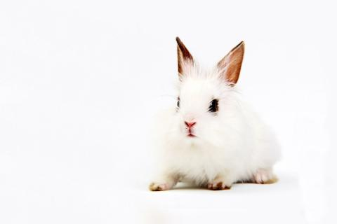 animals-bunnies-white-background-2535087-480x320