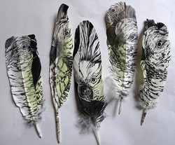 Printed Feathers