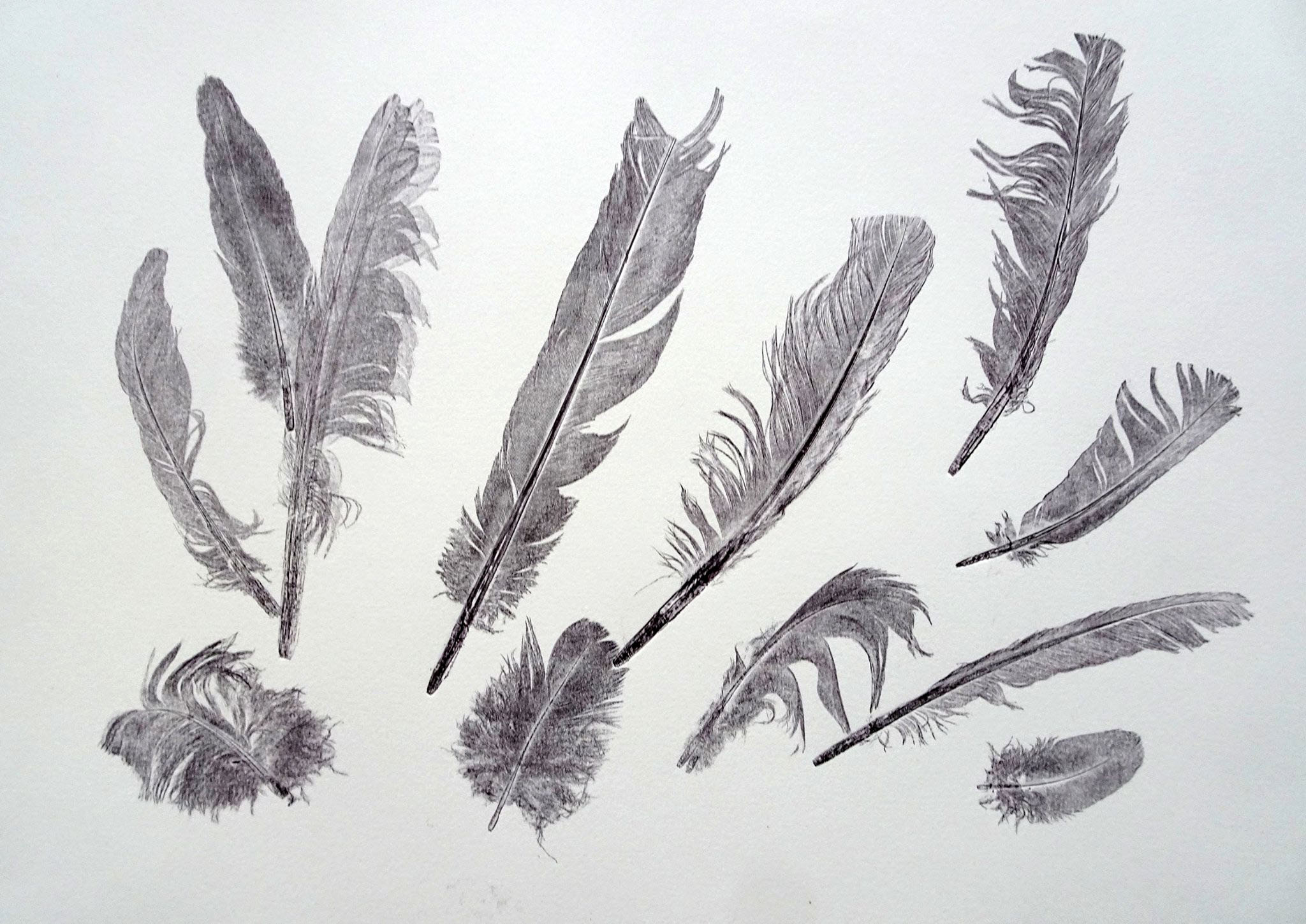 Feather Monoprint