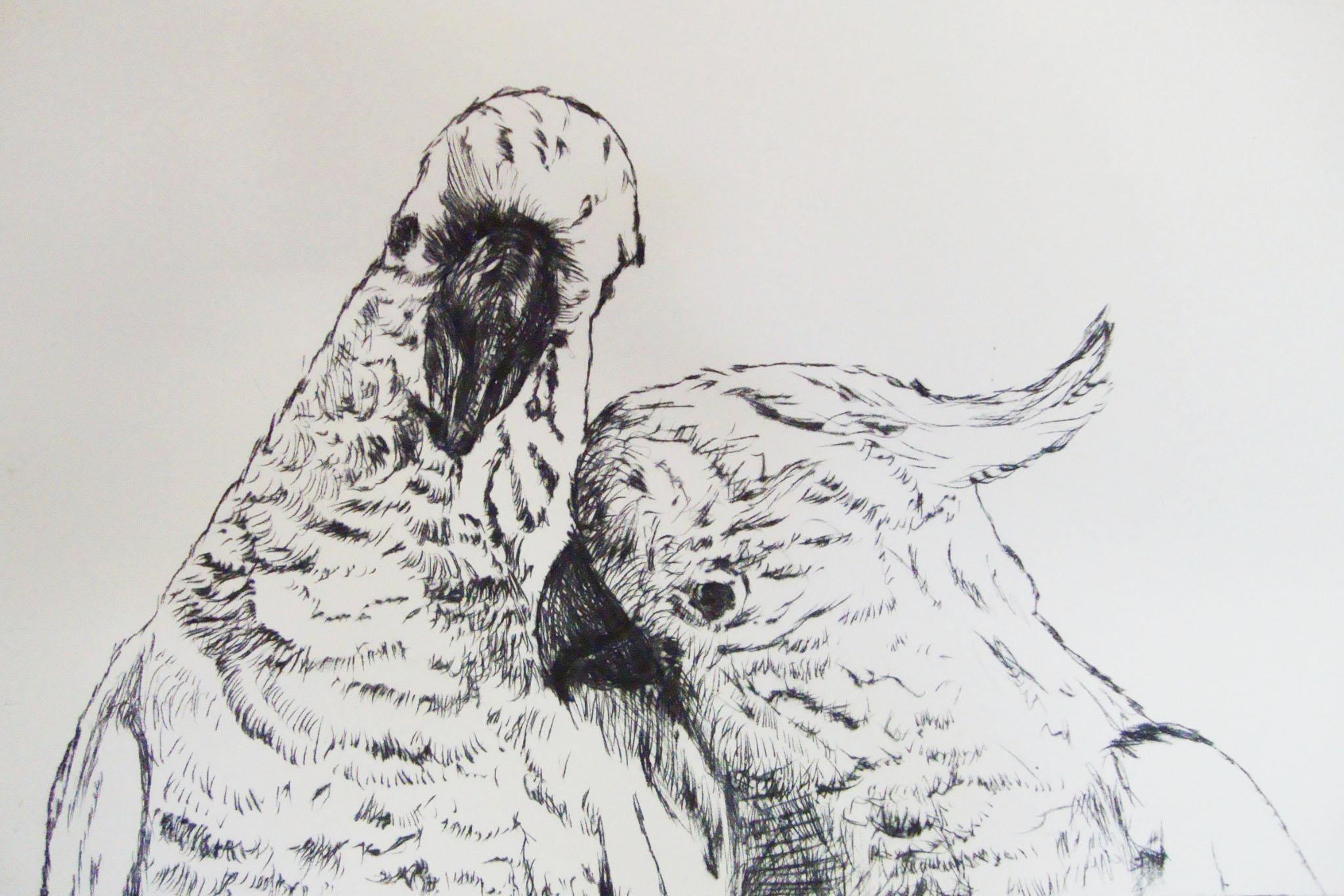 Cockatoos 2