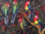 easternrosellas copy.jpg