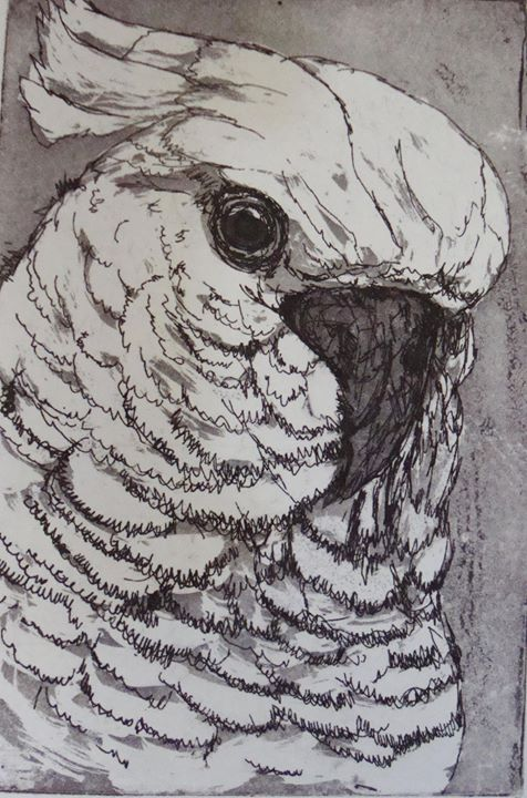 Cockatoo with Aquatint and Cine Collection