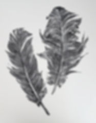 website_linofeatherprint.jpg