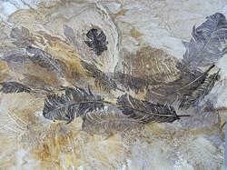Feather Drift 2