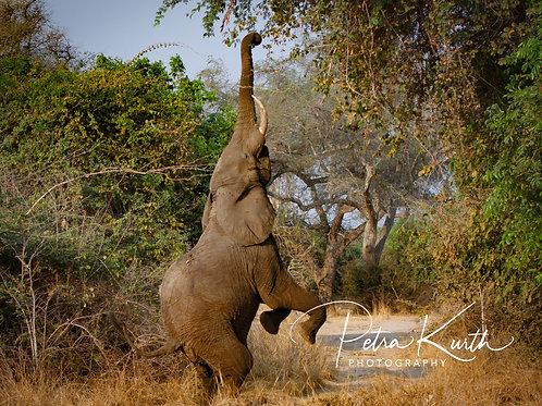 aussergewöhnliche Begegnung mit einem Elefanten