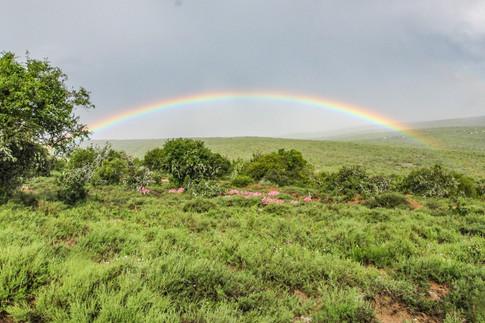 Rainbows of Bucklands