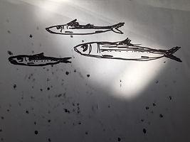 Sardines%20croquis_edited.jpg