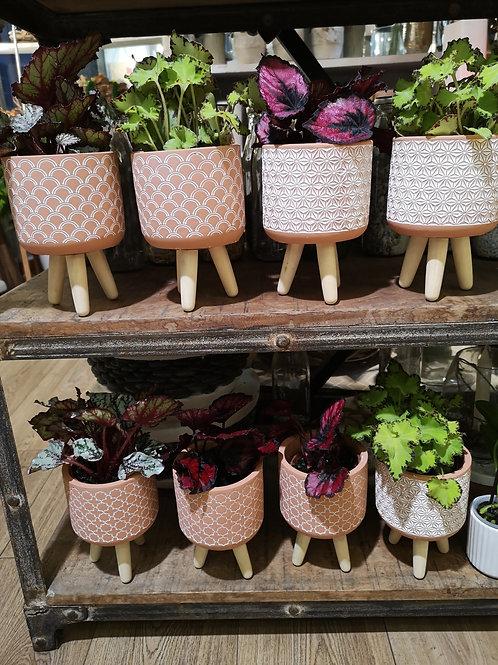 Plante verte dans son cache pot sur pieds bois