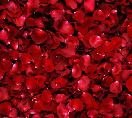 Les Roses Sont Rouges ...