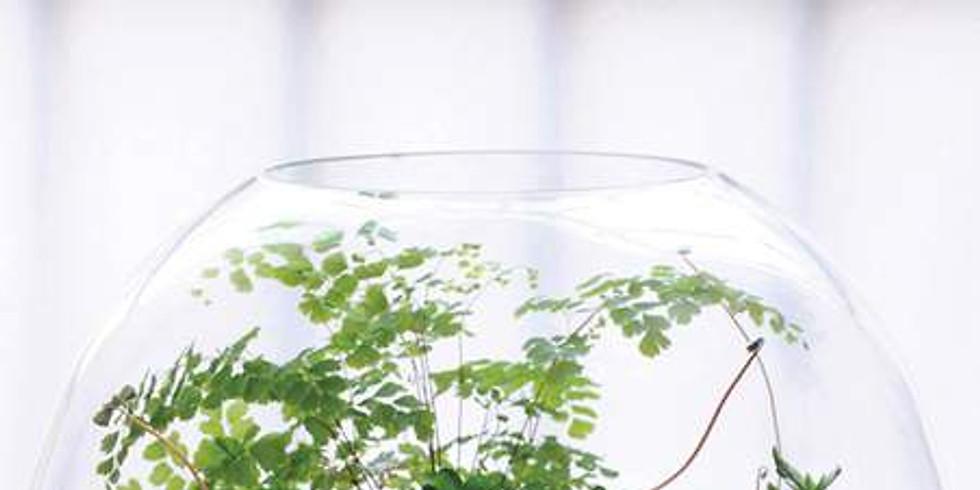 Mon précieux terrarium...