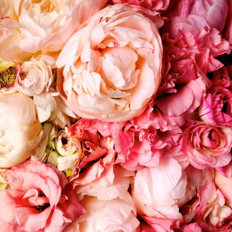 Notre Fleur du mois : Célébrons La Pivoine !