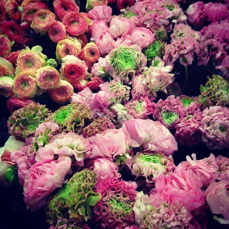 Notre Fleur du mois : la Renoncule