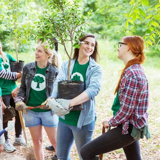 Volunteer to Plant Trees in Hartley