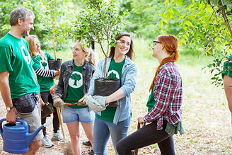 Plantando árvores