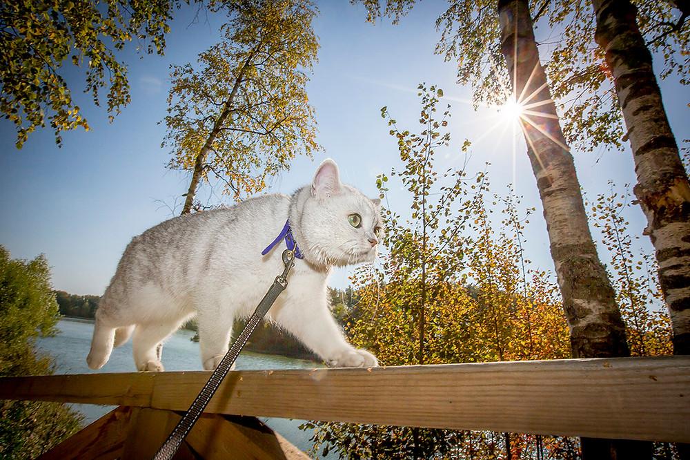 Кот на прогулке на фоне солнца.jpg